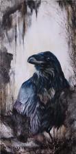 Raven 6