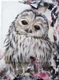Barred Owl Juv.